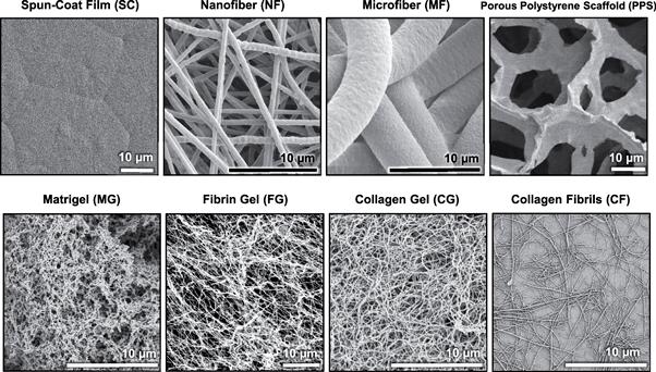Микрофотографии различных по морфологии скаффолдов