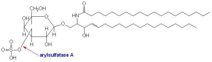 Структура цереброзидсульфата
