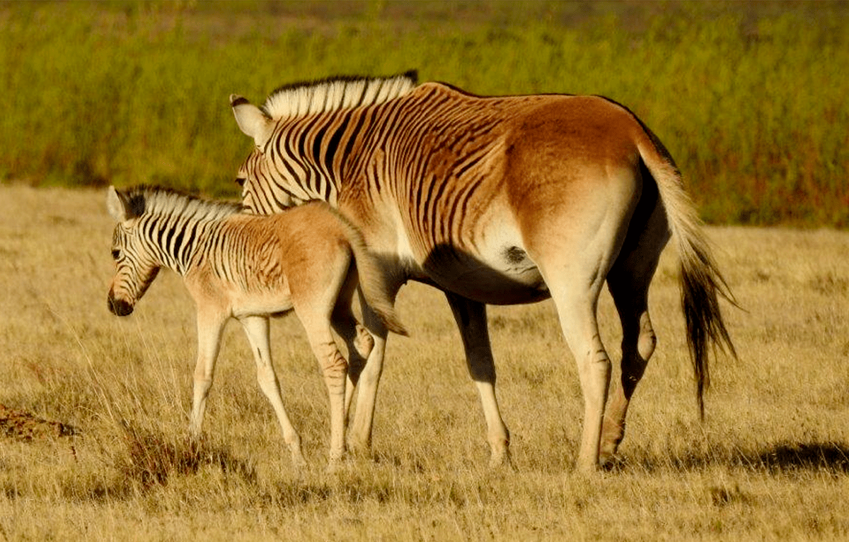 The Quagga Project
