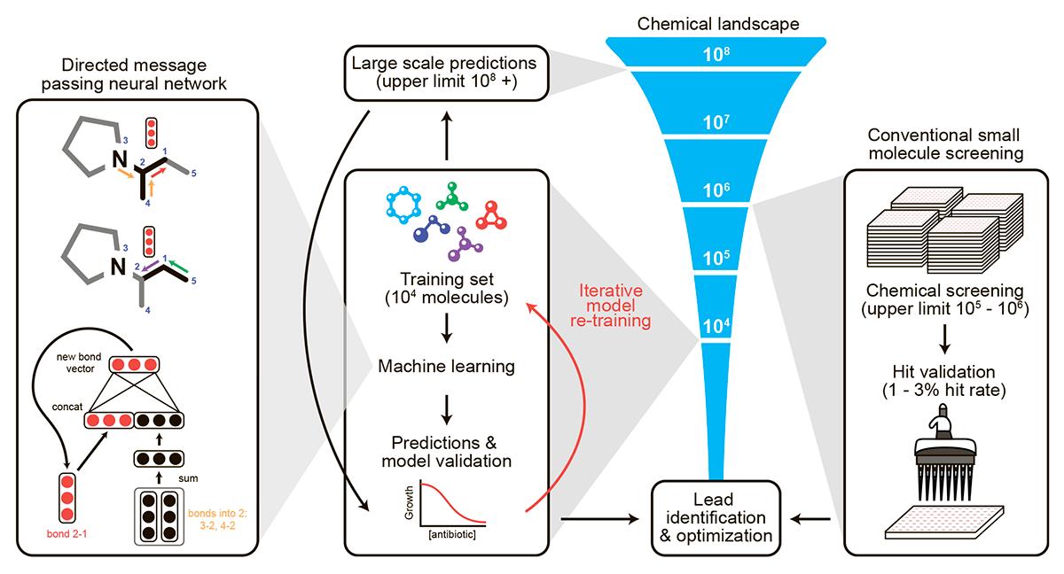 Машинное обучение и поиск новых антибиотиков