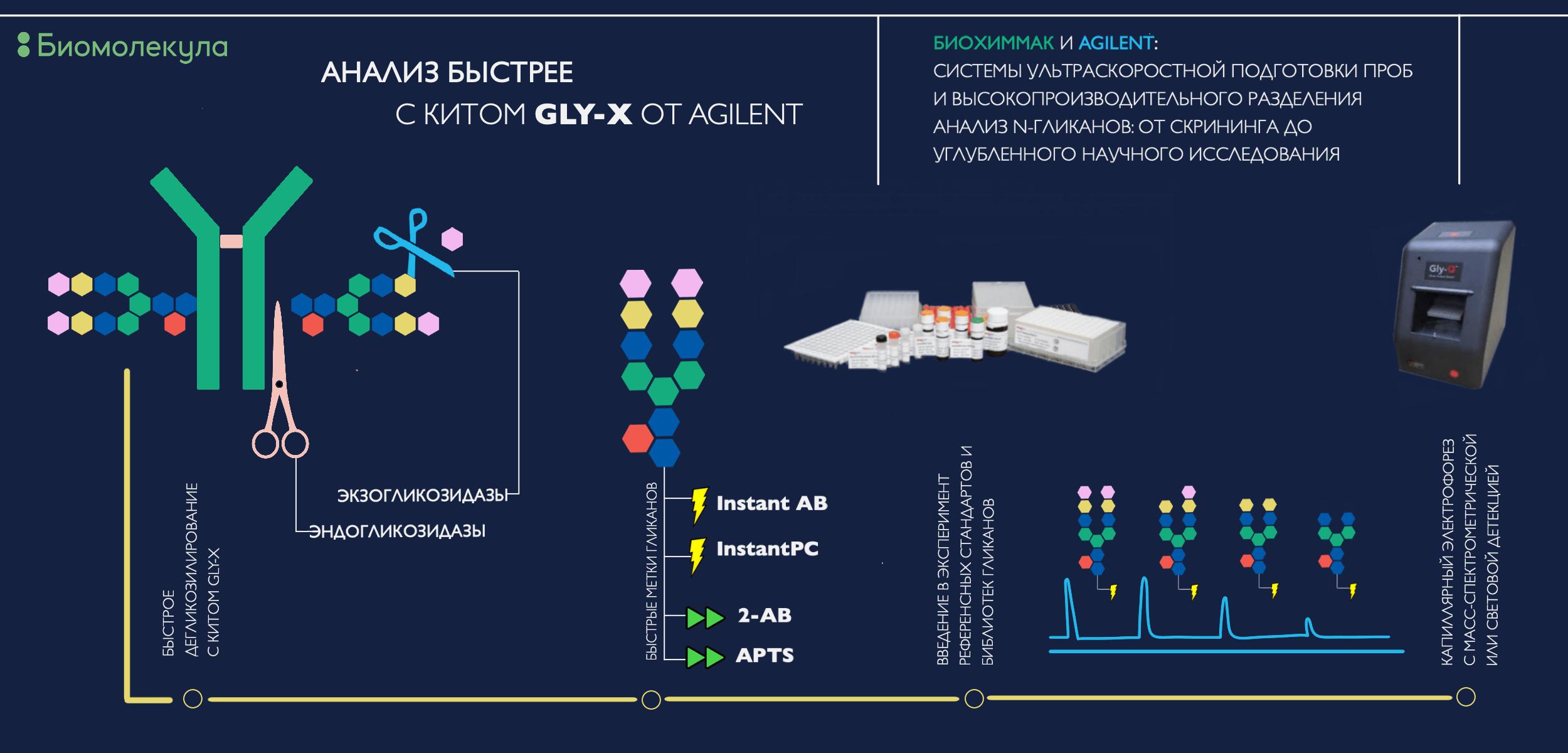 Анализ N-гликанов