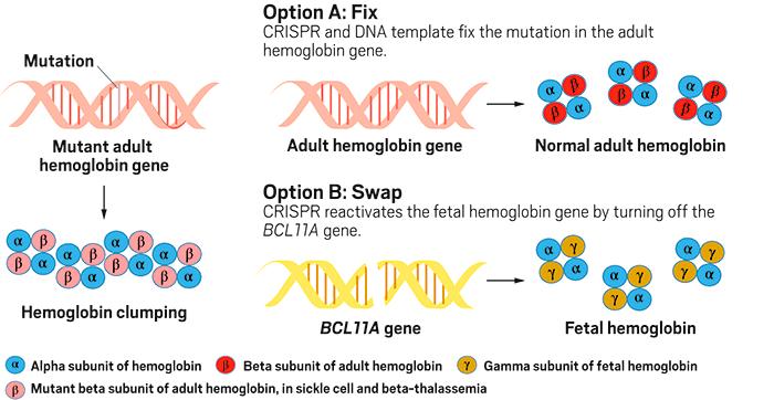 Как работает «генетическое лекарство» CTX001