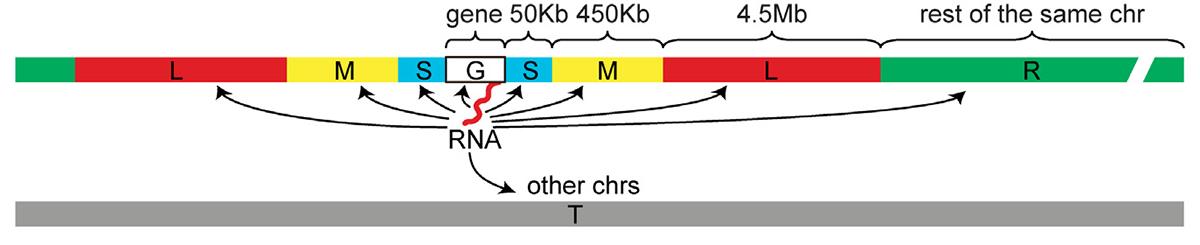 Интервалы, на которых рассчитывалась частота контактов для каждой РНК
