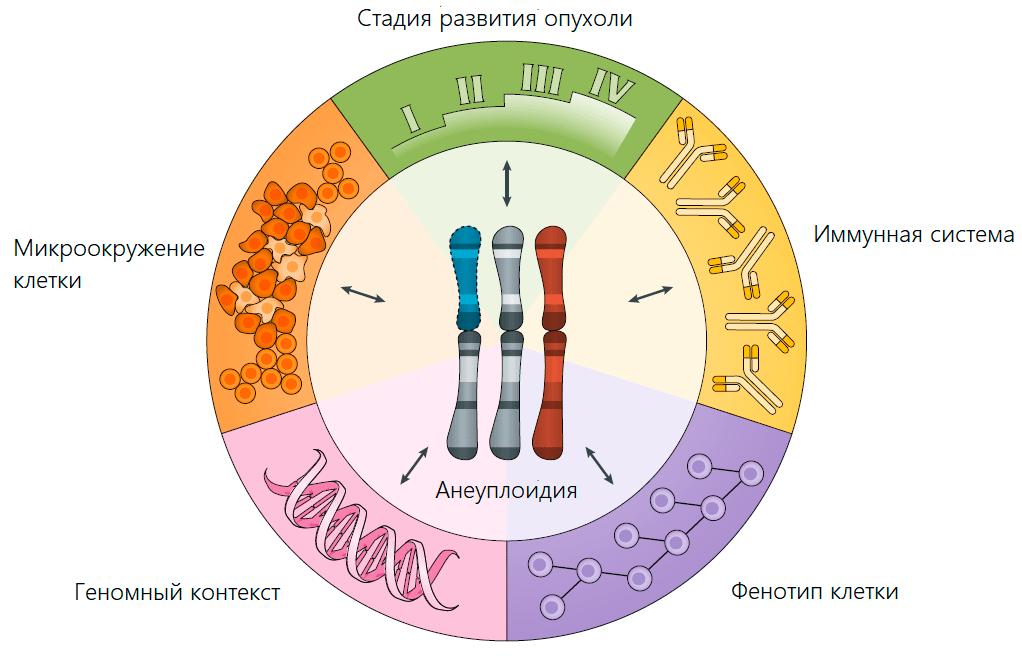 Основные факторы, определяющие адаптивную ценность анеуплоидии