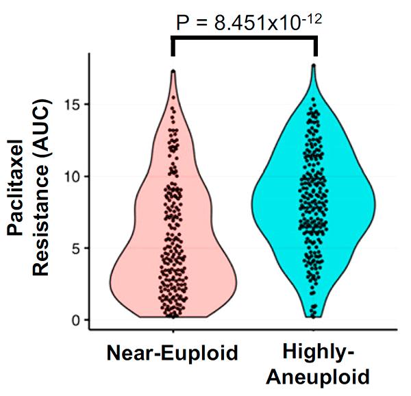 Связь между чувствительностью к паклитакселу и степенью анеуплоидности