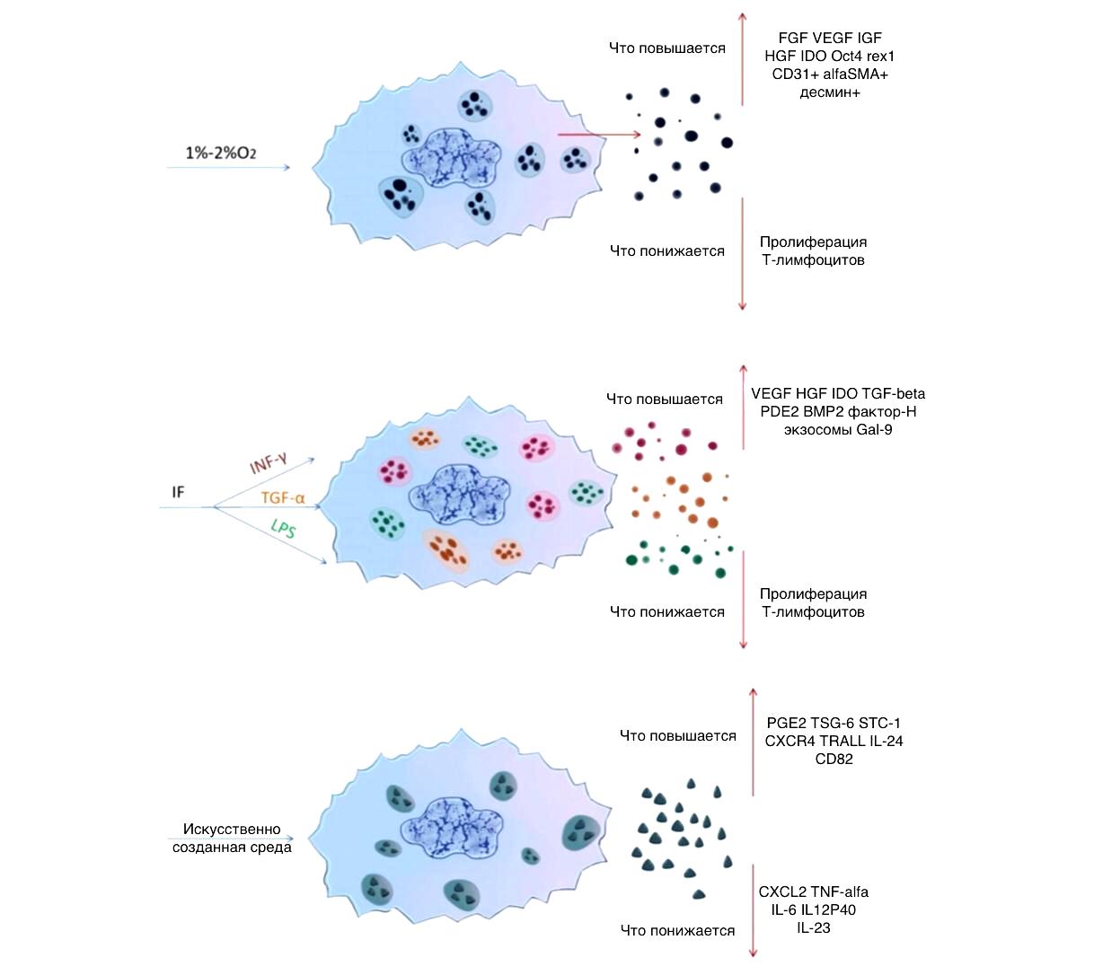 Как изменения микросреды влияют на состав продуктов секреции