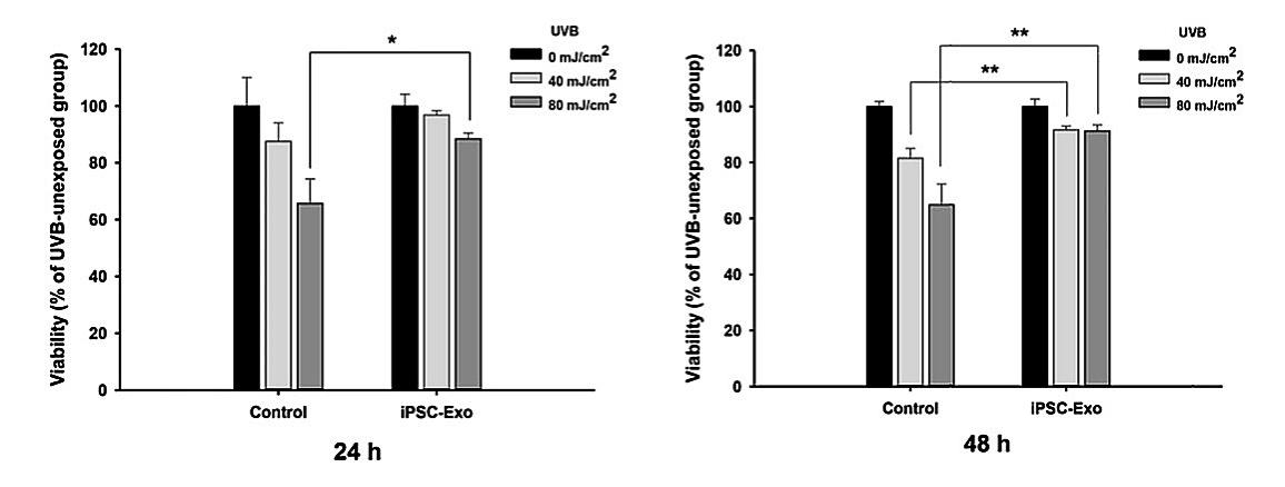Влияние иПСК-экзосом на клетки кожи