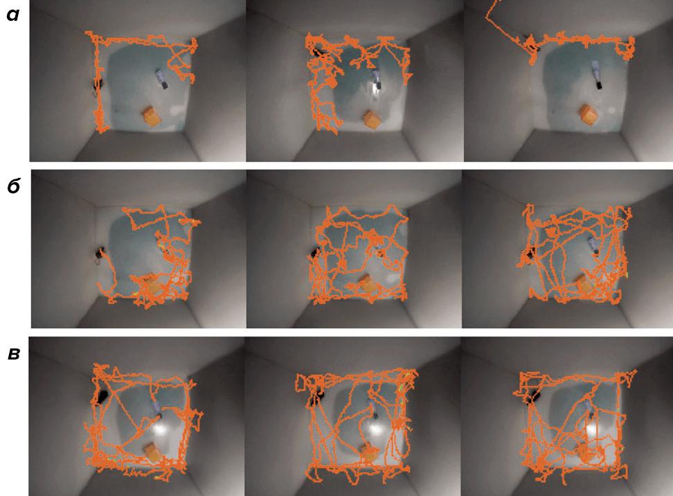 Перемещение мыши в незнакомой клетке