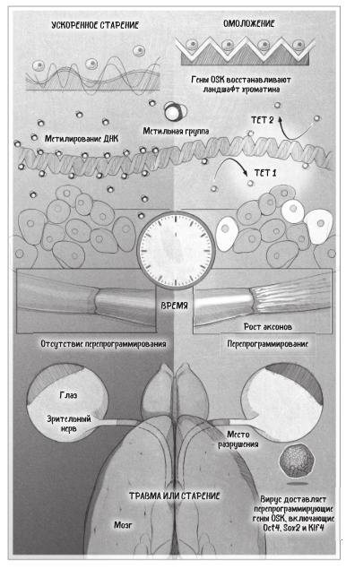 Эпигенетическое перепрограммирование