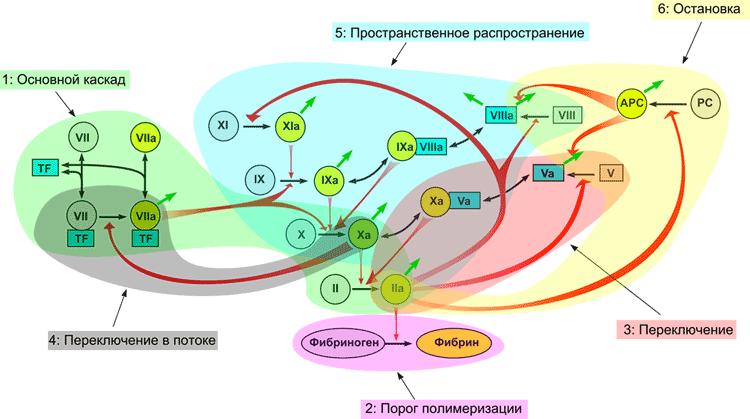 Модульная структура системы свертывания