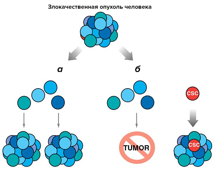 Клетки Шванновские