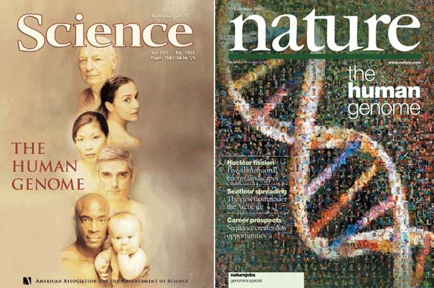 Популярно о генетике и генетическом влиянии полов