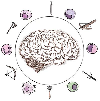 Рассеянный склероз: иммунная система против мозга
