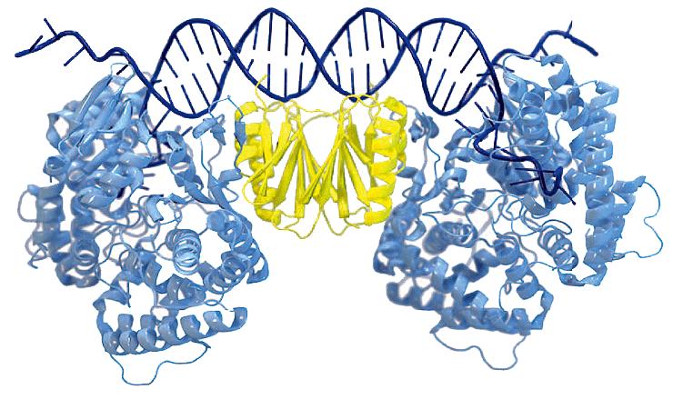 Кристаллическая структура комплекса Cas1—Cas2
