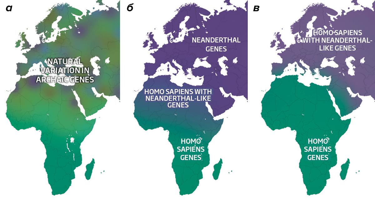 Смешение генов неандертальцев и человека разумного