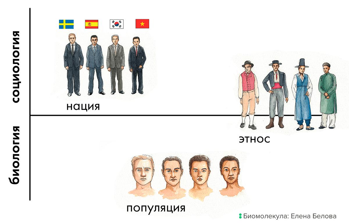 Популяция, нация и этнос