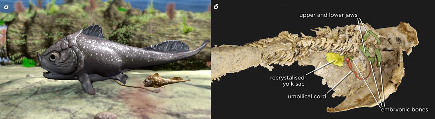 Пластинокожая рыба, найденная в Австралии