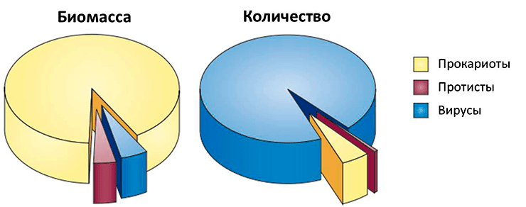 Относительные биомасса и количество прокариот, протистов и вирусов в океанах