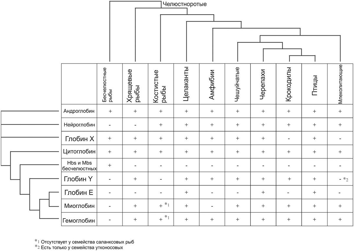 Распределение глобинов среди позвоночных